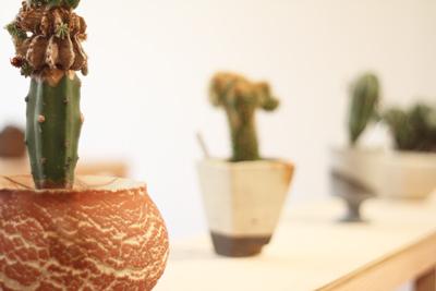 とてもいい顔してる多肉植物サボテンの展覧会が1月20日まで