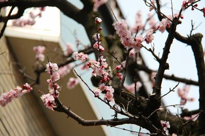 【第2回】恵比寿お花見桜スポット