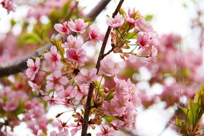 【第一回】恵比寿お花見桜スポット 恵比寿東編