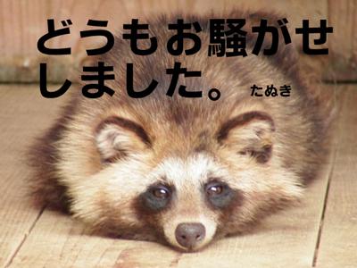 【追跡】恵比寿に現れたタヌキは以前から目撃例あり