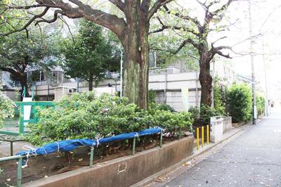 【悲報】恵比寿三丁目「伊達児童遊園地」の桜の木が伐採されます