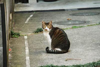 どの地区にも存在する「地域猫」って皆さんご存知ですか?