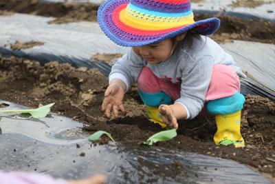 みんなで週末畑をやりましょう。恵比寿新聞ファーム第2期応募を開始します。