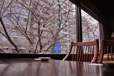 【必見】桜を眺めながら食事が楽しめる和食店登場「イワカムツカリ」