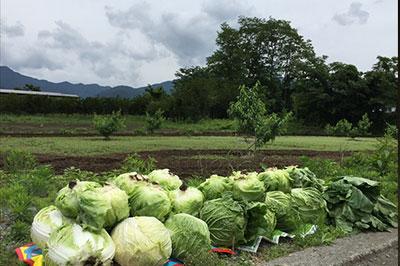 恵比寿新聞ファームで収穫した朝どれ野菜を6月21日エビスマルシェで即売します