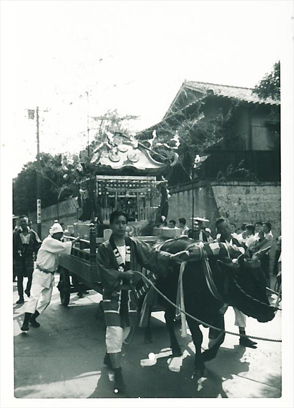 宮神輿を運ぶ牛。年代は不明