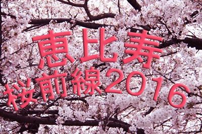 2016年度版 恵比寿桜開花情報とお花見スポットのご紹介