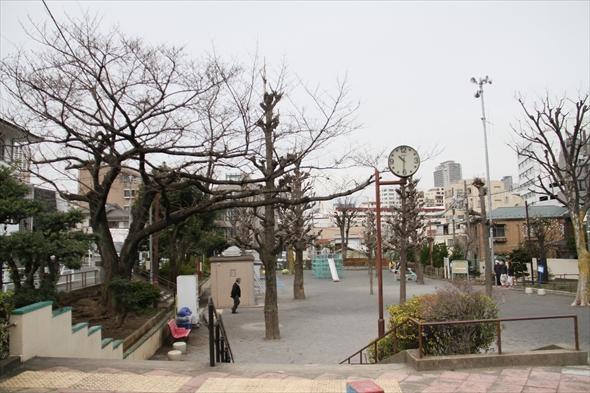 sakura025