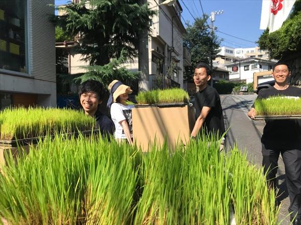 恵比寿で田植えの準備