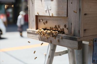 恵比寿1丁目でミツバチが大量に引っ越しして大騒ぎ。その原因は?