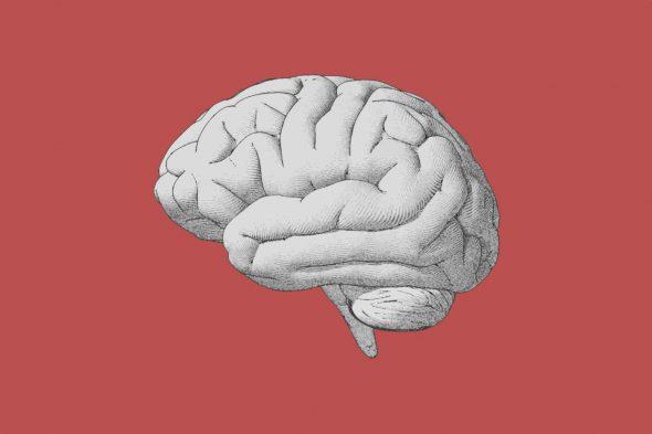 brain-927822014-e1533699958158